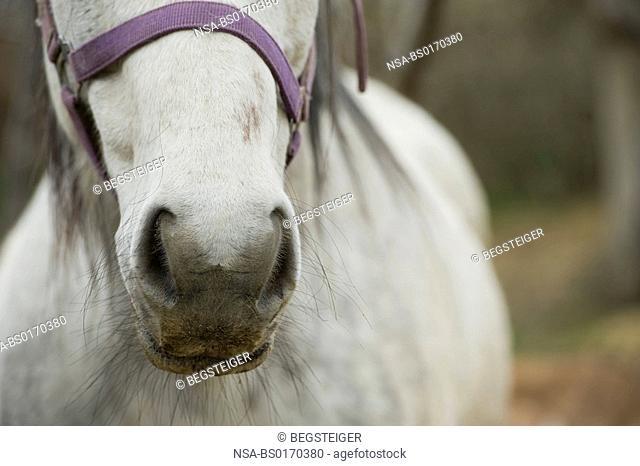 nostrils of a horse