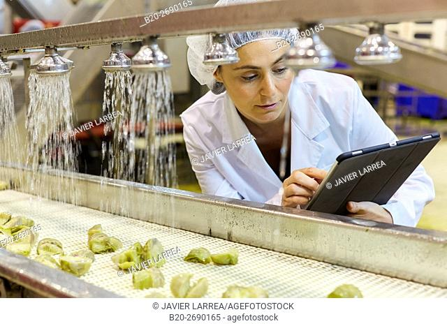 Dull artichokes. Production line of canned vegetables and legumes, Canning Industry, Agri-food, Gvtarra, Grupo Riberebro, Villafranca, Navarre , Spain
