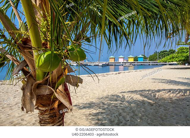 Belize, Placencia, beach cabanas through coconut tree