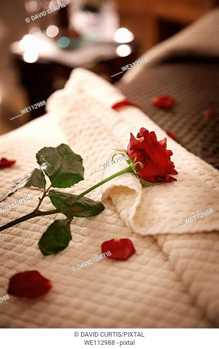 Red rose and petals left on a bed