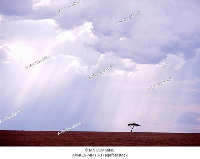 Flat-topped acacia tree beneath stormy skies