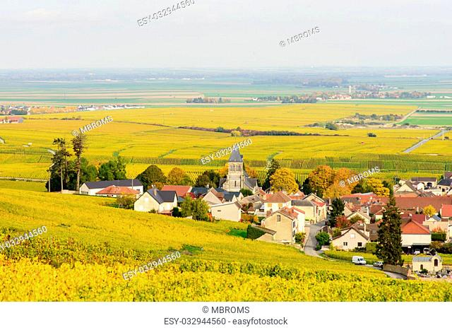 Champagne wine fields in autumn colors. Rows of plats with leaves turning from green to yellow. The village of Oger and its church in center