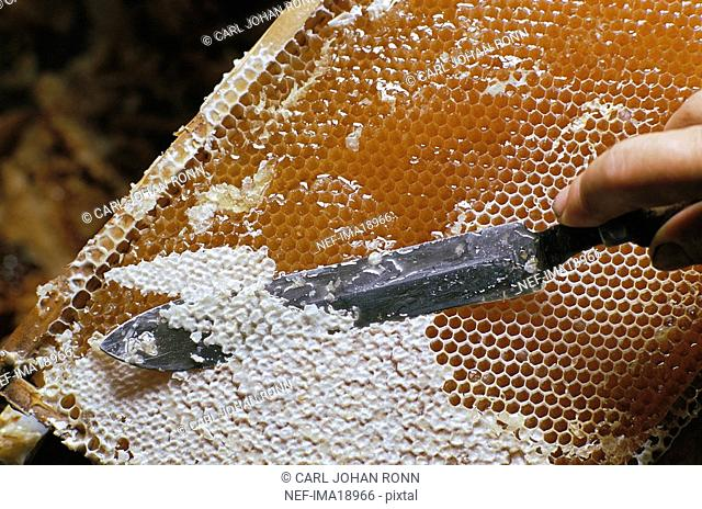 Hand with knife taking out beewax from honeycomb, close-up
