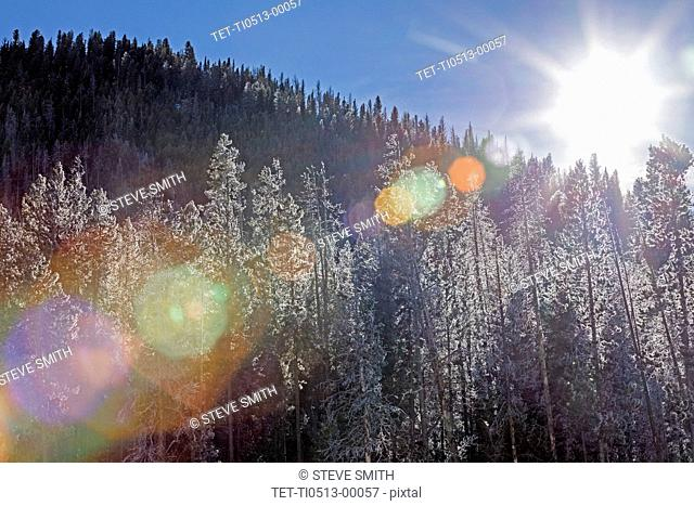 Sunshine over forest in Stanley, Idaho
