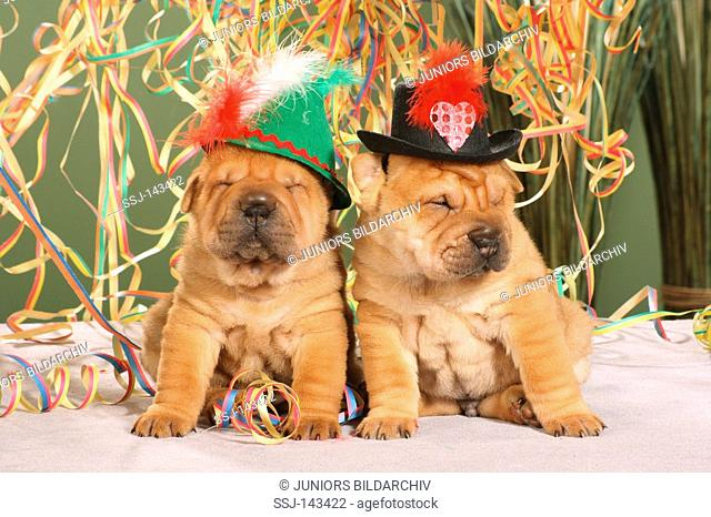 two Shar Pei puppies with hat between paper streamers