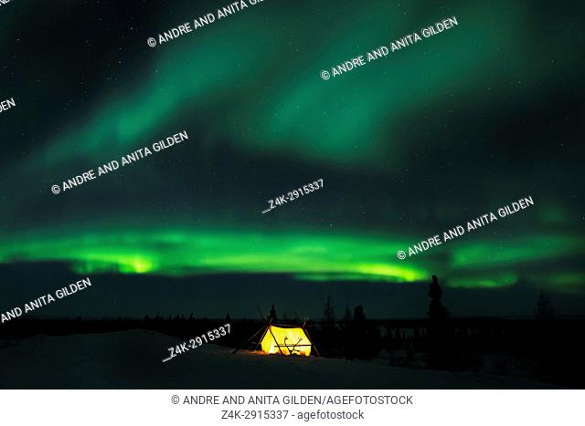Nightsky and trappers tent lit up with aurora borealis, northern lights, wapusk national park, Manitoba, Canada