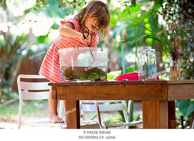 Girl standing on chair to scoop fishing net in plastic tadpole pond on garden table