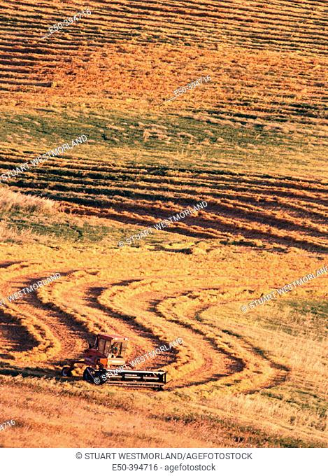 Combine harvesting lentils and barley. Eastern Washington. USA