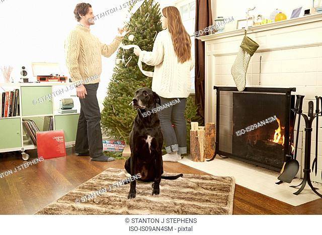 Young couple with pet dog preparing decorations for christmas tree