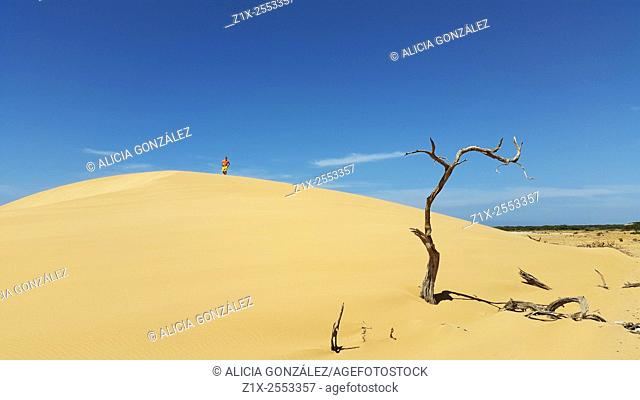 Sand dune, dry trunk and man in Falcon State, Venezuela