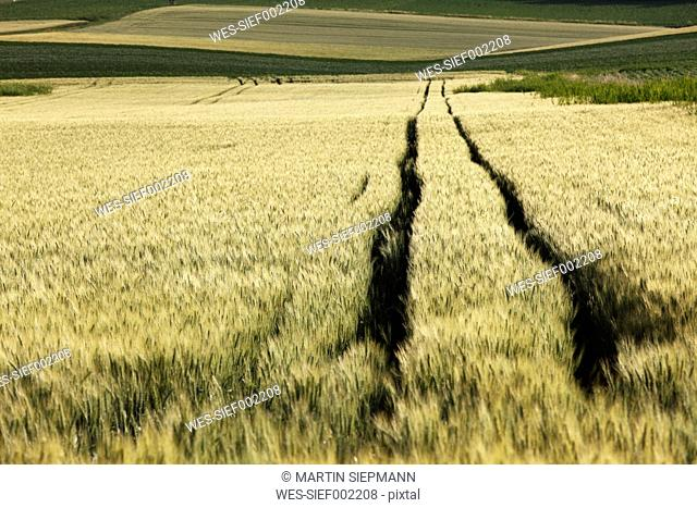 Austria, Lower Austria, Weinviertel, View of grainfield