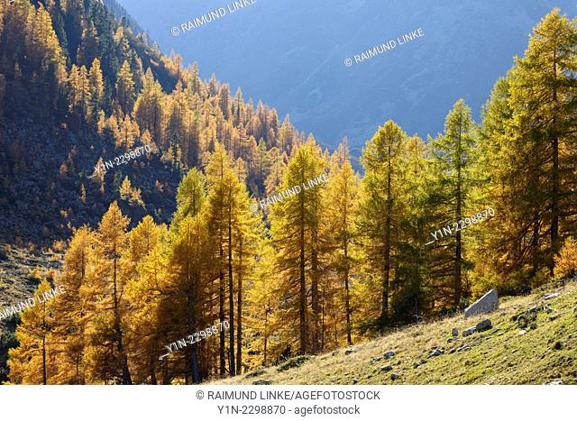 Alpine Landscape with Larch Trees in Autumn, Fluelapass, Susch, Grisons, Switzerland