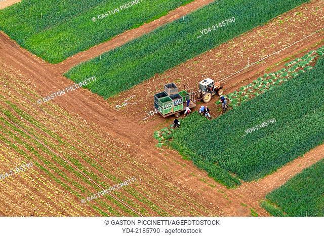 People working in the farm land, Mallorca, Balearic Island, Spain