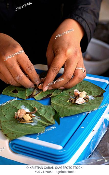 Longneck Karen woman preparing betel nut with chalk and a leave for chewing, Mae Hong Son, Thailand, Southeast Asia