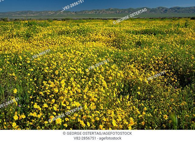 Alkali goldfield, Carrizo Plain National Monument, California