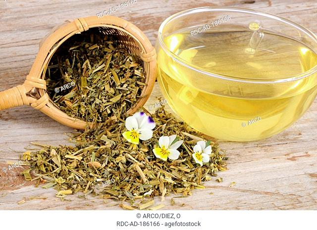 Cup of Field Pansy tea, Viola arvensis