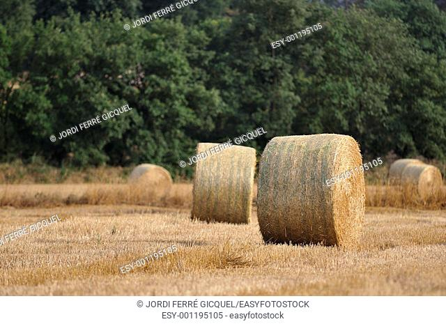 Bales of straw, Catalonia, Spain