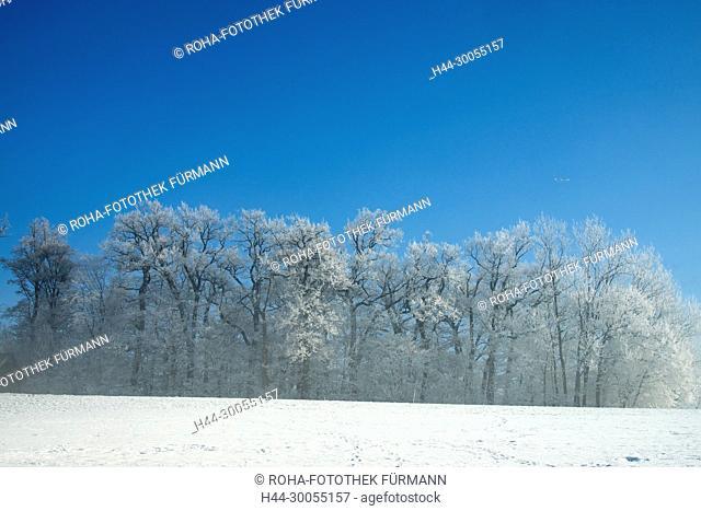 Bayern, Berchtesgadener Land, Laufen, Abtsdorf, Saaldorf, Haarmoos, Winter, Stimmung, Nebelstimmung, Winter, Schnee, Nebel, Kälte, Kaelte, kalt