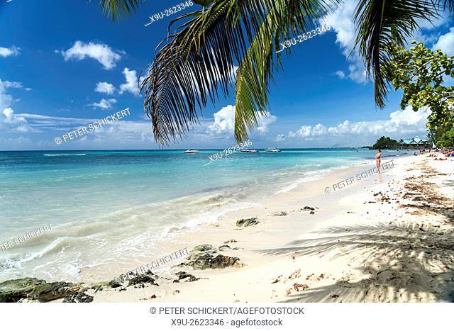 palm fringed sandy beach of Bayahibe, Dominican Republic, Carribean, America,