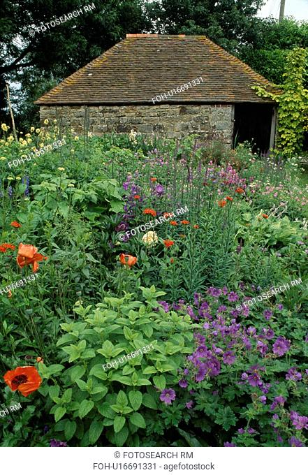 Stone garden building behind a deep late spring perennial border with oriental poppies ,hardy geraniums and campanula
