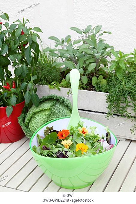 MIXED SALAD BOWL WITH; PEA SHOOTS ESCAROLE BABY SPINACH BABY CHARD FRISEE LETTUCE AND RADDICHIO WITH EDIBLE NASTURTIUM FLOWER (TROPAEOLUM) WITH MIXED HERB...