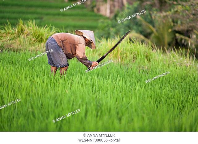 Indonesia, Bali, man working in the field