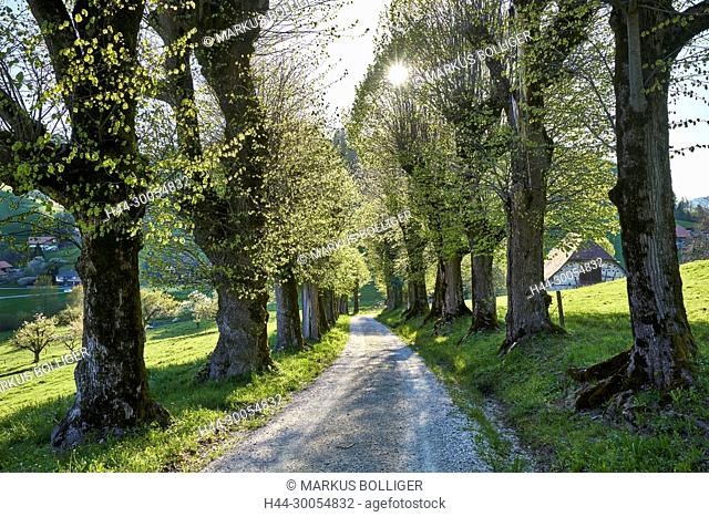 tree, rears up, avenue, tree row, away, gentle, spring, castle-away, burgistein, country lane