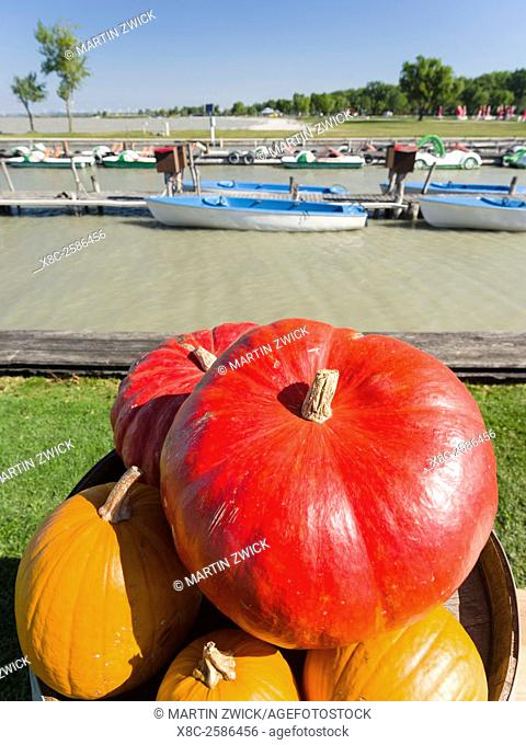 Podersdorf am See on the shore of Lake Neusiedl. Pumpkins in the domestic port. The landscape around the lake is an UNESCO World Heritage