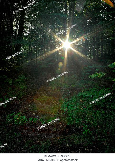 Wood, back light, sunrays