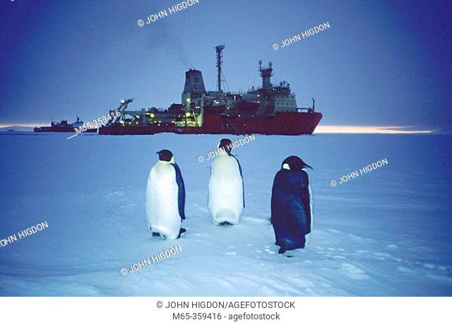 Emperor Penguins (Aptenodytes forsteri) and two icebreakers (Nathaniel B. Palmer and the US Coast Guard Cutter Healy) enjoying the sunset, Antarctica