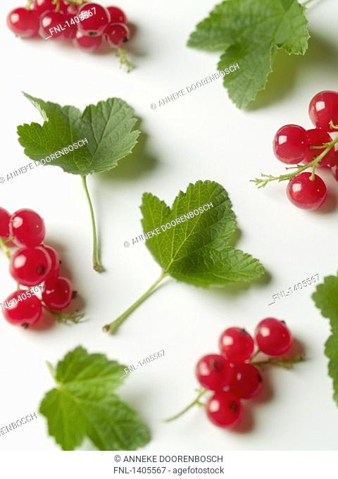 Close-up of red currants and leaves