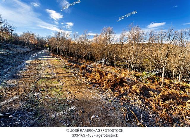 The Dehesa road in the Sierra Norte  Somosierra  Madrid  Spain