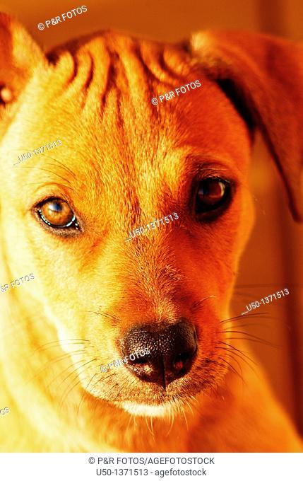 Pup dog, 2009