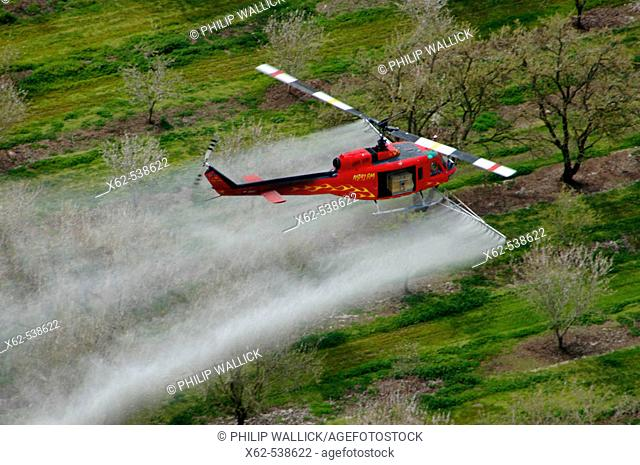 Helicopter spraying almond orchards. California, USA