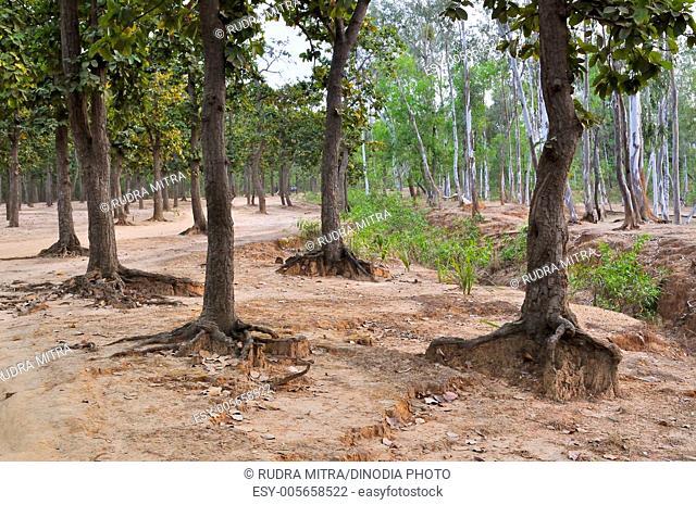 Prantik ; Shantiniketan ; West Bengal ; India