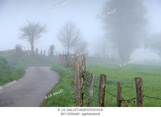 France, Auvergne, Cantal, Foggy morning at Saint Constant