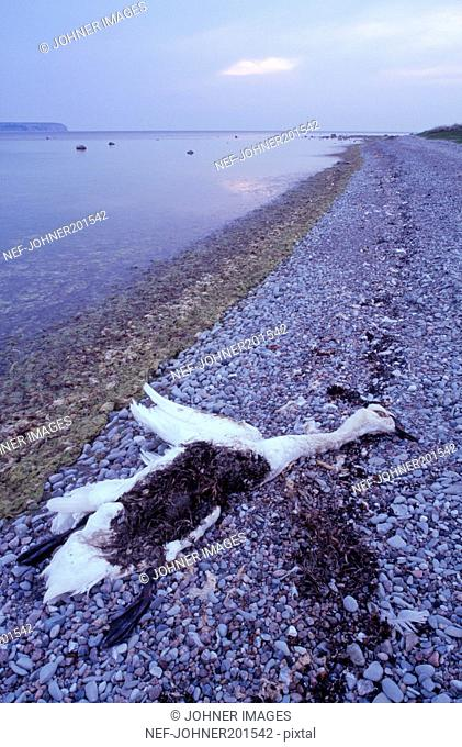 Dead bird beside sea