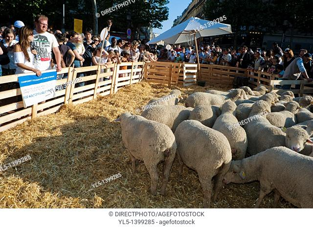 Adults Visiting Paris, France, Garden Festival, Sheep on Avenue Champs-Elysees