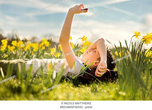 Boy lying in daffodil field looking at his cell phone