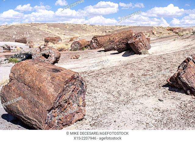 Petrfied Forest and Painted Desert in the Southwest United States in the State of Arizona are unusual geologic formations with bright colors