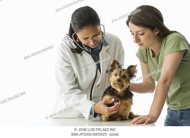 African female veterinarian examining Yorkshire Terrier puppy