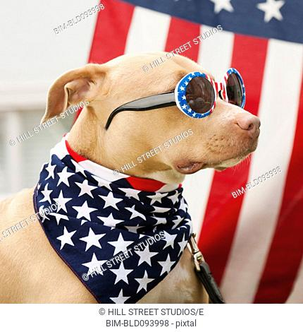 Dog dressed in American flag neckerchief and sunglasses