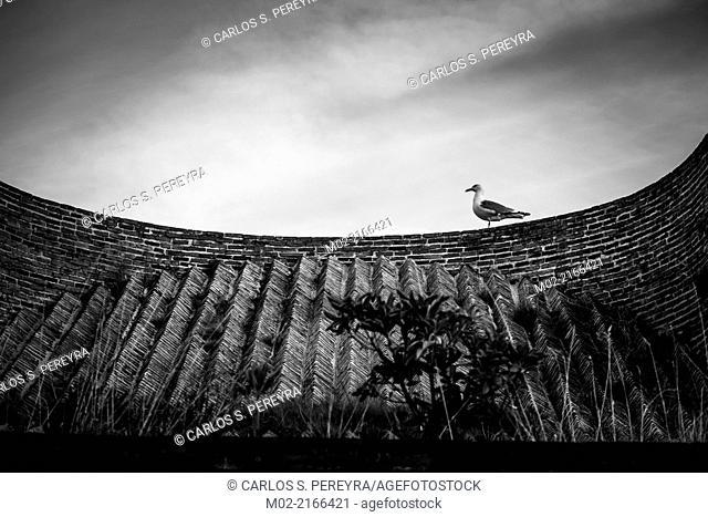 Bird and architecture in Gijon, Asturias, Spain