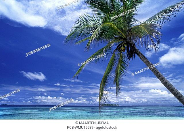 Palmtree with coconuts over a blue sea