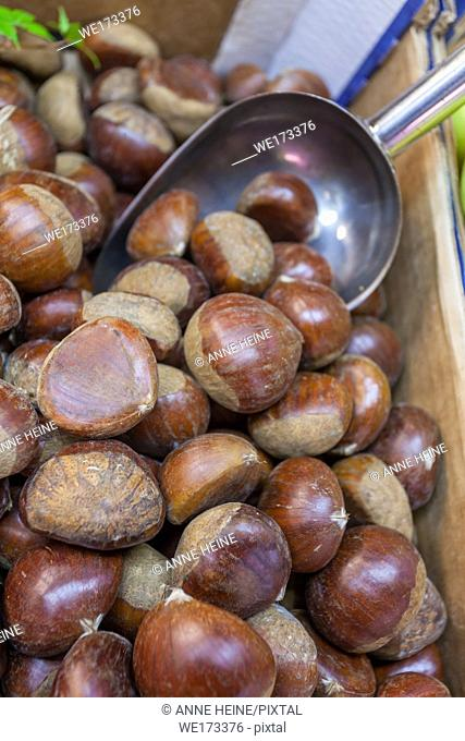 Bushel of chestnuts at a fruit stand in Market Hall Cagliari, Sardinia, Italy