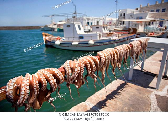 Octopus hanging to dry by the sea near the port, Naoussa, Paros, Cyclades Islands, Greek Islands, Greece, Europe