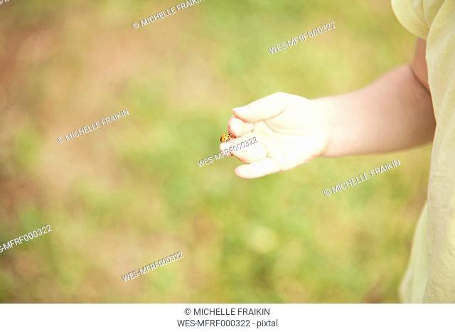 Little girl's hand with ladybird