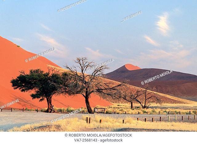 Dead Acacia and trees surrounded by sand dunes Deadvlei Sossusvlei Namib Desert Naukluft National Park Namibia Africa