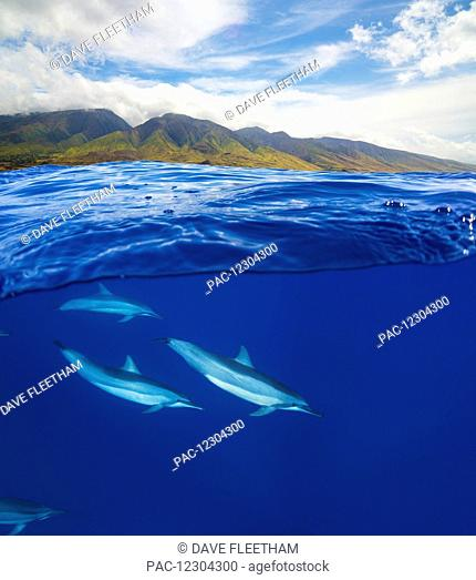 A split view of spinner dolphin (Stenella longirostris) below and the island of Maui above; Maui, Hawaii, United States of America