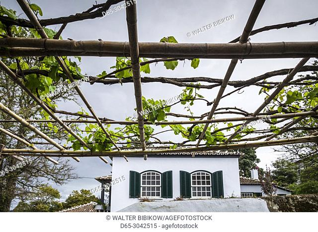Portugal, Azores, Terceira Island, Biscoitos, vineyard vines